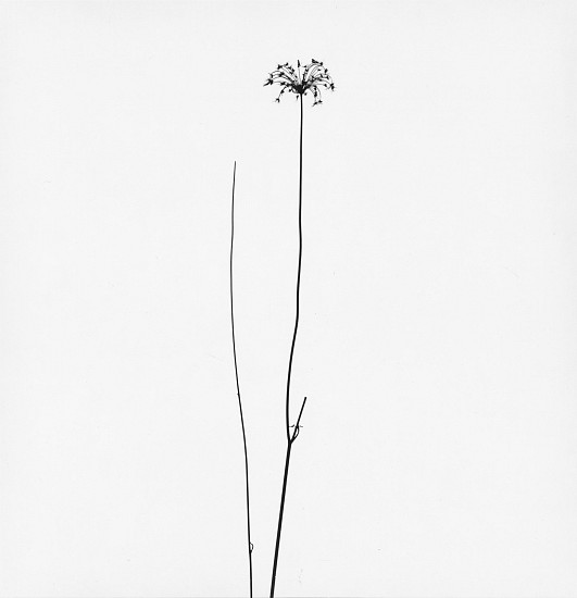 Harry Callahan ,   Michigan  ,  1948     Early gelatin silver print ,  6 3/4 x 6 1/2 in. (17.1 x 16.5 cm)     4163     Sold