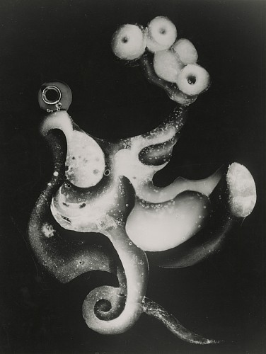 Current Exhibition: An Octopus's Garden May 22 - Jun 30, 2020